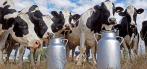 Should we let dairy farmers be #MilkedDry ?