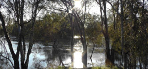Flowing with community care for Murrumbidgee people
