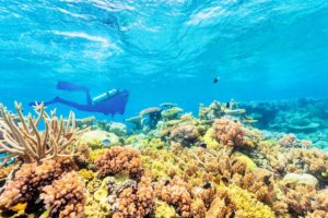 It's time to act to save the Reef, finds new report