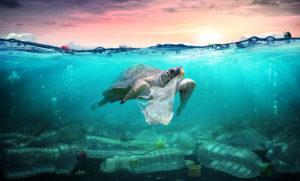 Do we still want single-use plastic?