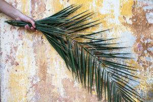 Why Palm Sunday matters