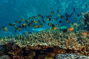 Biodiversity: A concern that is urgent and existential