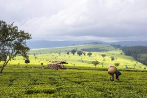 Fairtrade Fortnight 2020 begins