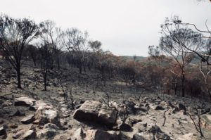 'I felt immense grief': one year on from the bushfires, scientists need mental health support